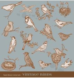 Hand drawn set birds vector image