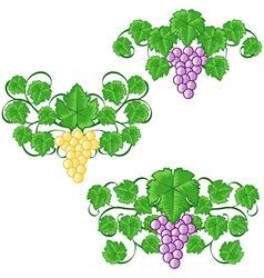 wine ornaments 04 vector image vector image