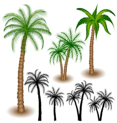 Palm tree set vector image vector image