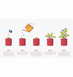 growing plant in pot stages vector image