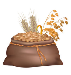 Rye grains in brown sack with its and oat ears vector