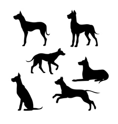 Breed of a dog great dane silhouettes vector image vector image