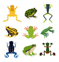 Exotic amphibian set different frogs in cartoon vector