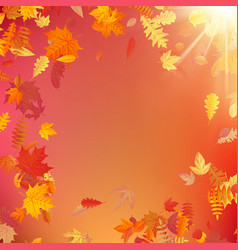 autumn template layout decorate with leaves eps vector image