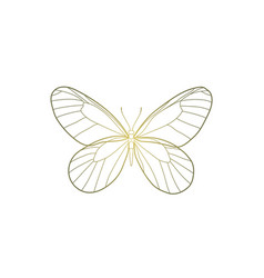 butterfly with golden gradient concept for design vector image