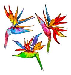 graphic colorful strelitzia collection vector image