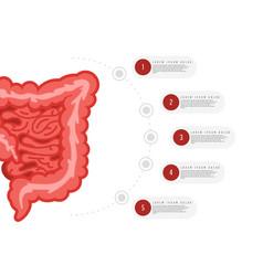 medicine biology concept infographics colon vector image