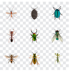 Realistic housefly bug wasp and other vector
