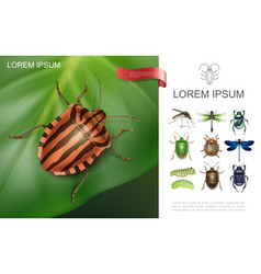 realistic insects colorful concept vector image