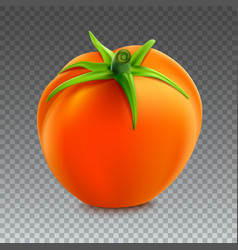 Red whole tomato isolated on transparent vector