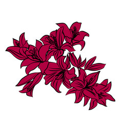 red lily on white background vector image vector image