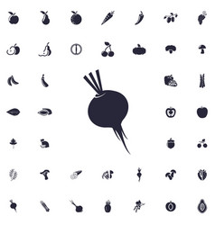 Beet icon vector