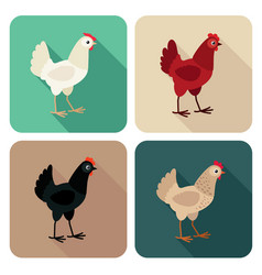chicken breeds icon set in flat style with shadow vector image
