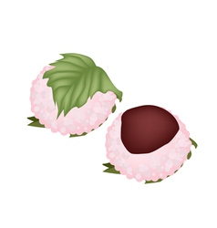 Japanese Confectionery of Sakuramochi vector image