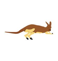Kangaroo isolated on white australian animal vector