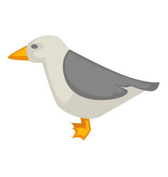 Seagull isolated on white colorful graphic vector