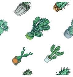 sketch hand drawn colorful cactus vector image