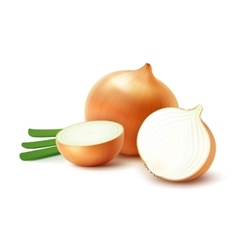 Whole and Sliced Yellow Onion Bulbs with Onions vector