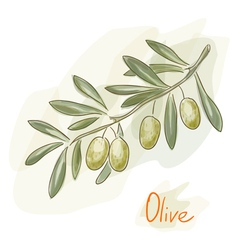 green olives watercolor style vector image vector image