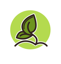 plant with leaves grows from ground in green vector image
