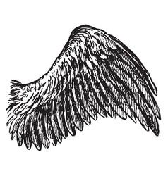 bird wing vintage vector image