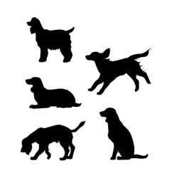 Breed of a dog Cocker Spaniel silhouettes vector