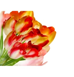 Flower with bokeh summer background eps 10 vector