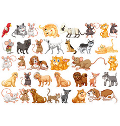 set differents pets vector image