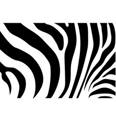 abstract background skin of a zebra white and vector image