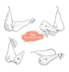 pear hand drawn sketch collection food vector image