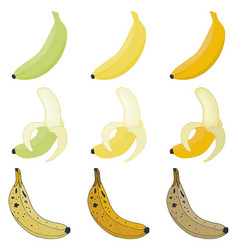 set bananas overripe and peeled fruit vector image