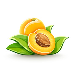 Apricot ripe fruits vector