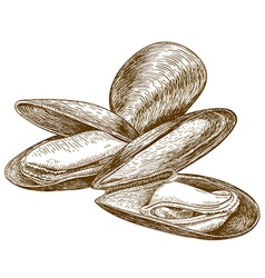 Engraving mussel vector