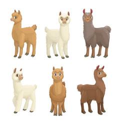 Lama alpaca guanaco llama and vicuna animals vector