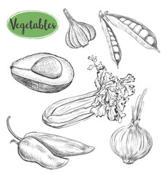 vegetables sketch set vector image