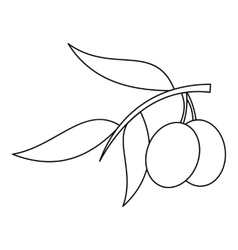 Olive branch with olives icon outline style vector