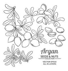 Argan branches set vector