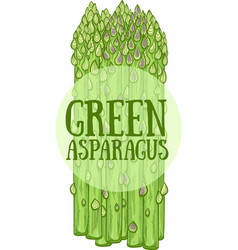 Green asparagus hand drawn vector