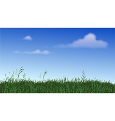 Panoramic field grass vector