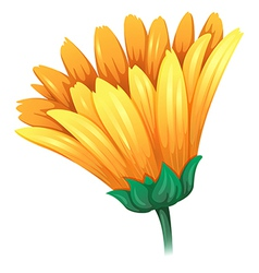A fresh yellow flower vector
