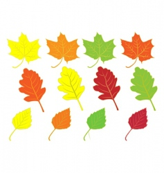 collection of colorful autumn leaves vector image