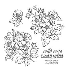dog rose flowers set vector image