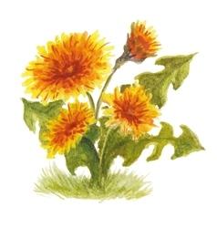 Fluffy yellow dandelion vector