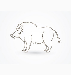 Boar wild hog pig standing vector