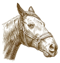 Engraving horse head vector