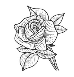 rose flower sketch engraving vector image