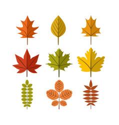 simple autumn leaf symbol graphic design template vector image