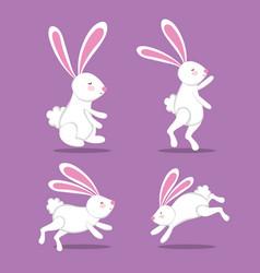 white rabbits cute animal image vector image