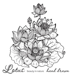 Beautiful monochrome floral bouquet of lotus vector image