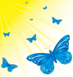 butterfly's and sun vector image vector image